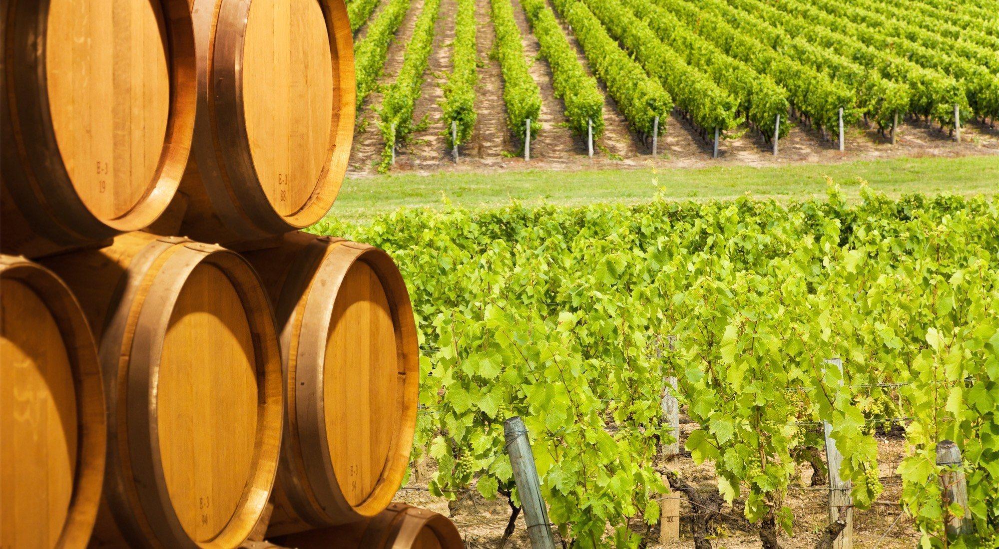 Vinos ecológicos: ¿cuál es su proceso de elaboración? ¿son recomendables?