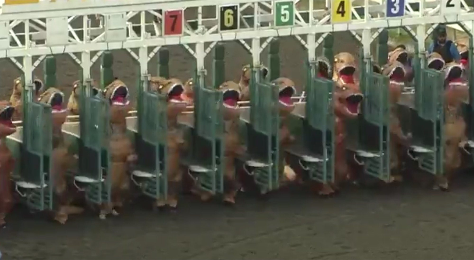 Carreras de T-Rex: la competición estúpida del año