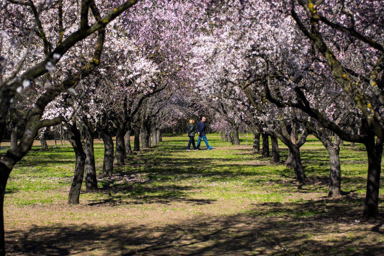 Parque de Quinta de los Molinos en Madrid, situado al final de la calle Alcalá