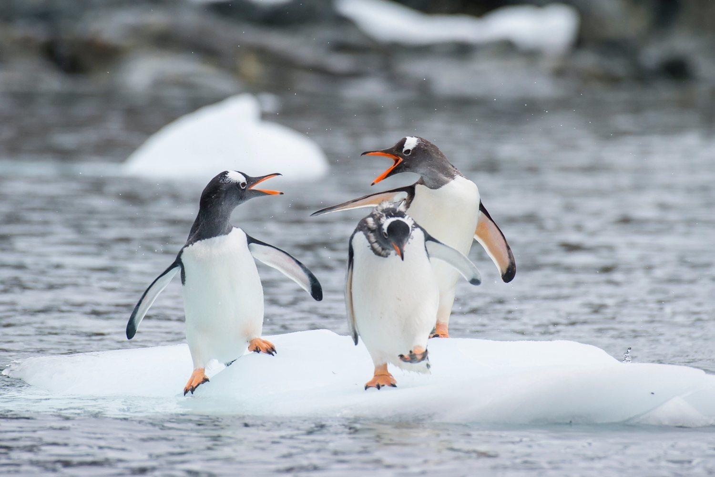 Los pequeños tendrán la oportunidad de dormir con los pingüino.