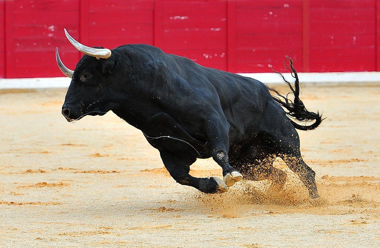 Los toros no odian el rojo, odian la tauromaquia.